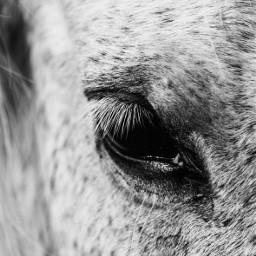 horse whitehorse eye animaleye animal myoriginalphoto