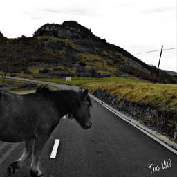 historiasdes_veladas_de_mi_dia_a_dia horse