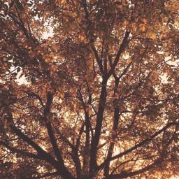 freetoedit sunrise tree autumntree goldenlight sunriselight goldenleaves fallsplendor coldmornings naturephotography