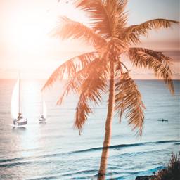 Beach Sea sky sun water Palm Boat Weihe summer Birds pcbeautifulbirthmarks happytaeminday fotoedit mspedit