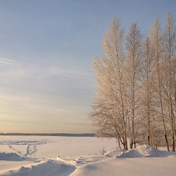 winter landscape trees naturephotography