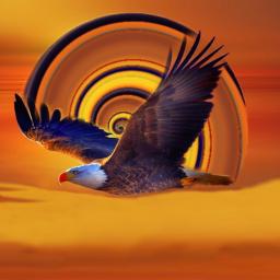 dios jesús jesus jesucristo cristo jehová fe bendiciones bendecir oración orar paz ánimo esperanza versiculos amén gloriaaadios biblia confianza confiar eagle águila freetoedit