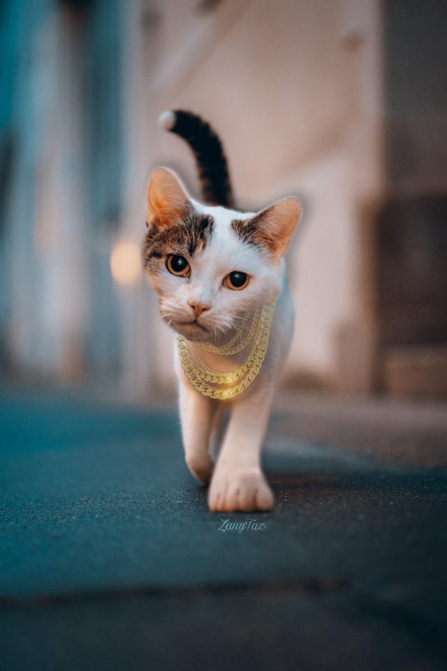 #catwalk #blingbling #swag #cat #streetcat #gangsta #kitty #photomanipulation #editedbyme #cutpaste #enlarge #filters #stickers #freetoedit
