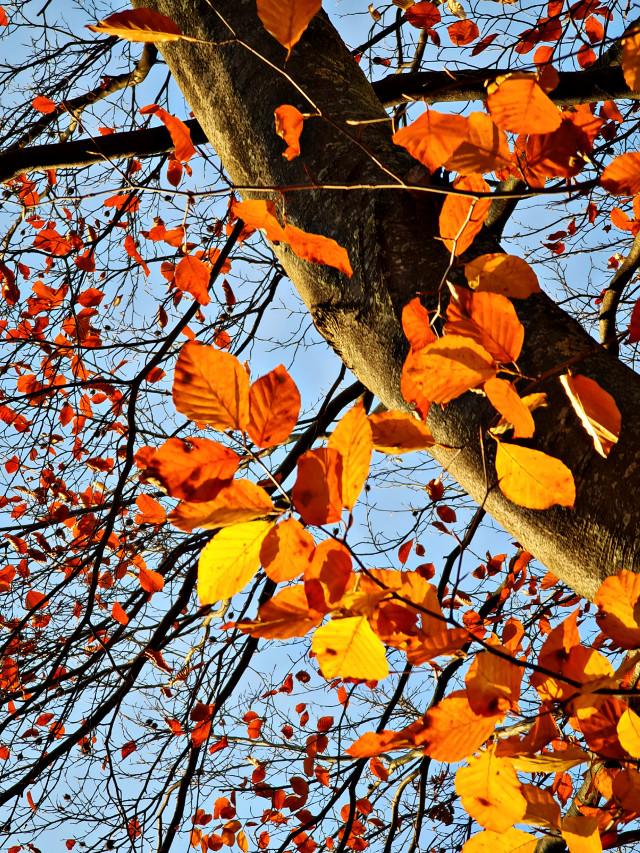 🧡🍂 #autumn #autumngold #autumnvibes #sunnyday #autumncolors #nature #naturephotography  #freetoedit