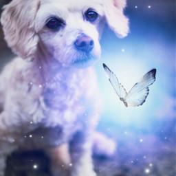 dog glow blue doggo cute magic butterfly stars starbrush sticker stickers stickerremix freetoedit