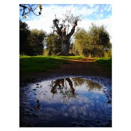 puddle autumn mirror naturephotography freetoedit