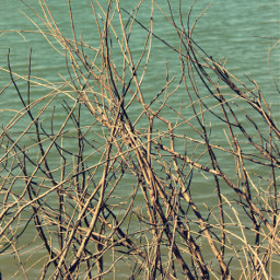 nature lakeshore wildplants branches driedbranches freetoedit