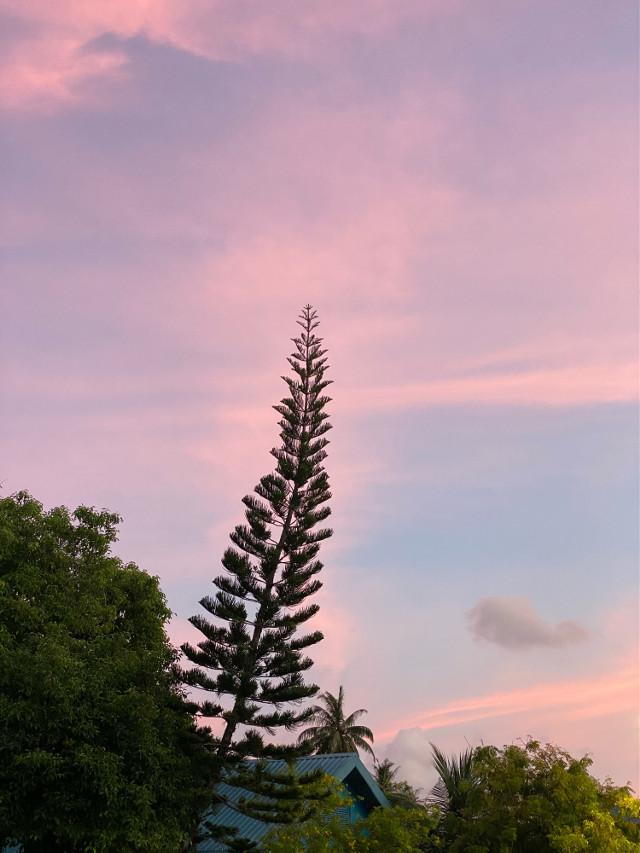 #naturephotography #sunsetview   #naturesbeauty  #myinspiration #pcmyinspiration #nofilter