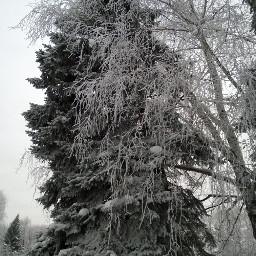 tree snow naturephotography landscape