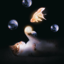 animals pet cat fish light bubble dark soapbubble flying magic unreal peaceful playing cute love madewithpicsart picsart heypicsart icyx remixit freetoedit editoftheday