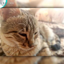cat cats catlover