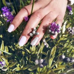 nails beautiful lavender flowers background photography freetoedit