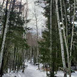 winter snowscape forest trees