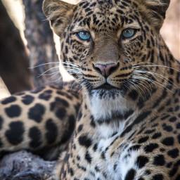 animal animals cheetah wildlife nature travel photography