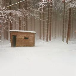 winter snow frozen coldday winterwonderland forest fog foggyday trees shed myphoto christmastime freetoedit