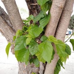green photography plant plants plantasmaravillosas mundoverde color freetoedit