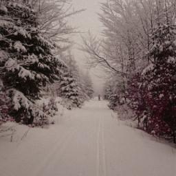 winter snow frozen coldday winterwonderland trees fog foggyday road dirtroad skitracks skier myphoto freetoedit