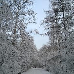 snow winter trees naturephotography