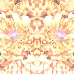 art diversidade crisantemo imageaboutyou freetoedit