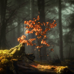 nature intothewoods smellingthepinetrees eucaliptus smellsilove freetoedit