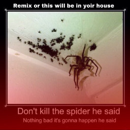 arachnophobia spooder spider freetoedit