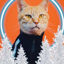 merrychristmas happynewyear cat freetoedit