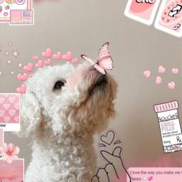 freetoedit ircpuppydogeyes puppydogeyes