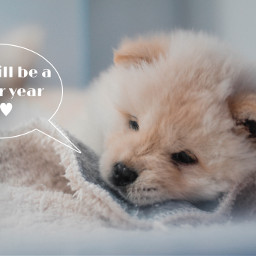 2021myyear 2021 better adorable adorabledog puppy cute dontworry freetoedit