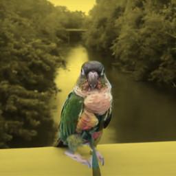 kermibird