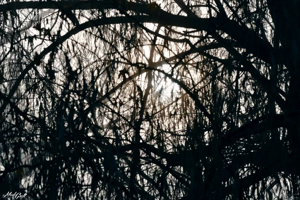 #myphotography #myphoto #trees #light #sun #fog #picsart #pa