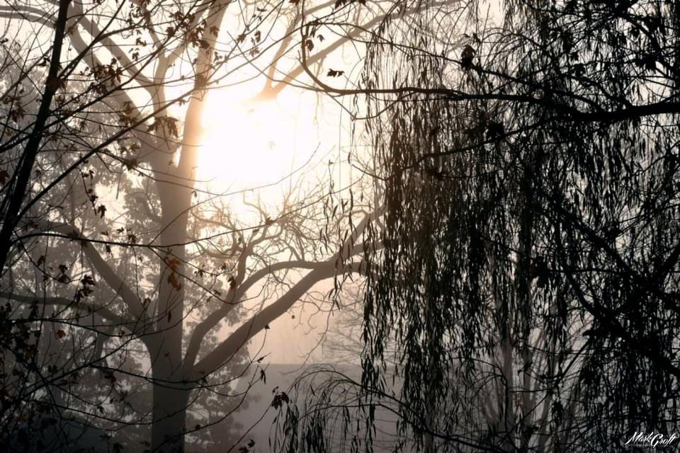 #myphotography #myphoto #pa #picsart #nature #trees #light #sun #shadow #fog