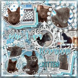 freetoedit hermionethekitten hermione cat hermionethecat