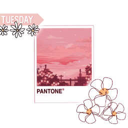 background wallpaper flowers daisy cute adorable picture polaroid pink simple cuteedits trendy tending aesthetic aestheticedit cottagecore cottagecoreaesthetic softaesthetic softedit california nature sunset sunsetaesthetic freetoedit