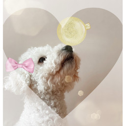 doglove freetoedit ircpuppydogeyes puppydogeyes