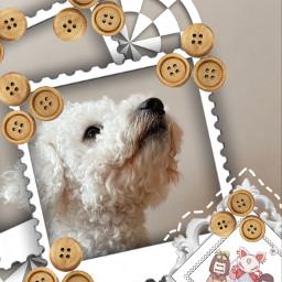 miniedit freetoedit ircpuppydogeyes puppydogeyes