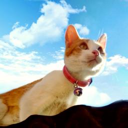 michimira michimiura michimoris cat cutecat beautifulcat cute freetoedit