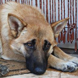 photography photo photooftheday photostory dog doglover dogphotography winter freetoedit