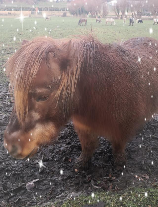 #poneys