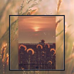 sunflowers freetoedit