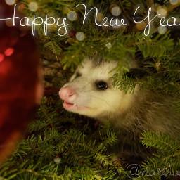 darthvaedaopossum opossum rescue happynewyear