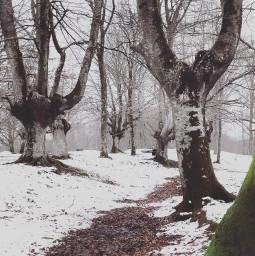 nature trees snow winter freetoedit
