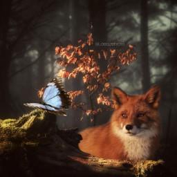 myedit edit editedbyme myartwork digitalart digital manipulation snapseed picsart fox foxlove freetoedit