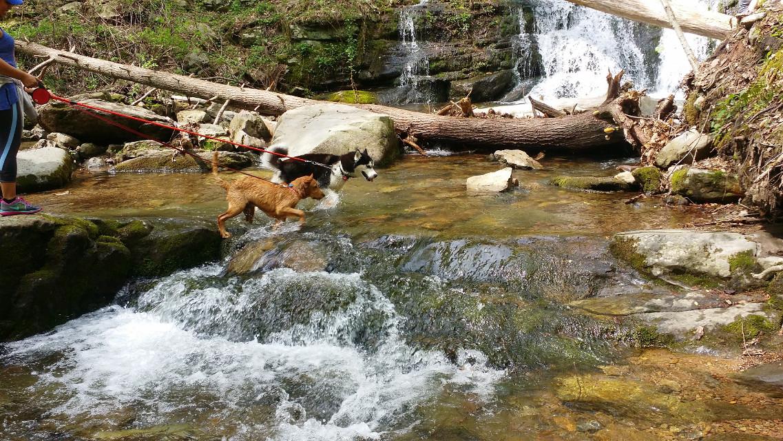 #dogs #dogslife #nature #dogslovers #dogsofpicsart #travel #lakeside. #lakesideview #lakelife