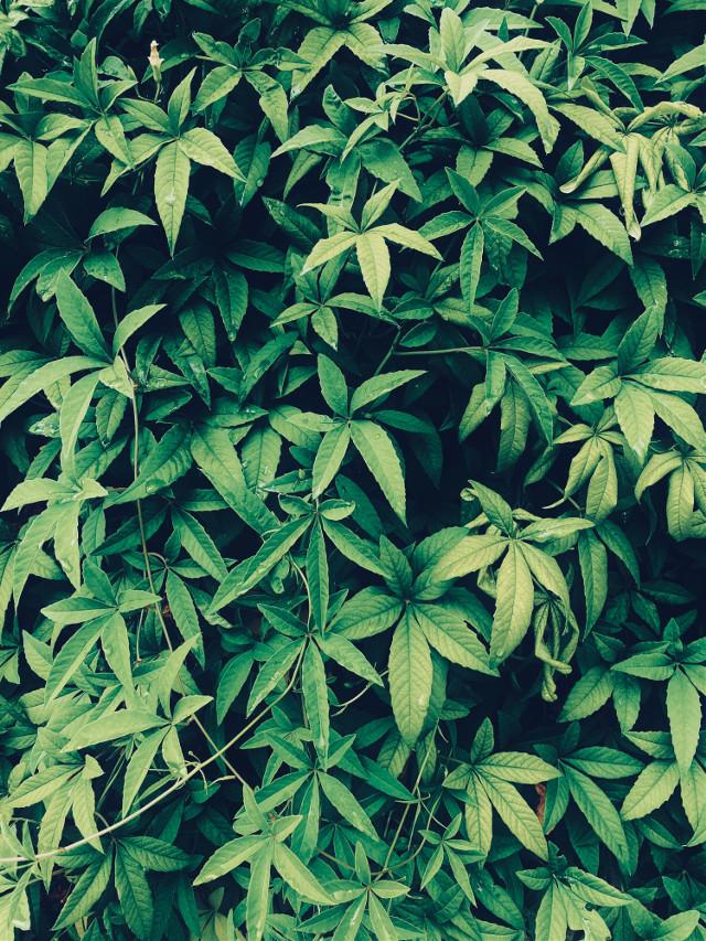 #greeny #leaves