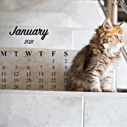 unsplash januarycalendar januarycalendar2021 cat simple freetoedit srcjanuarycalendar