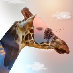 doubleexposure giraffe montain tree bird man freetoedit