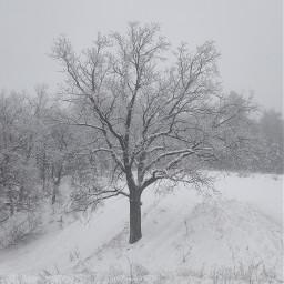 зима дерево