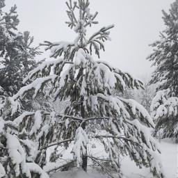 елки зима