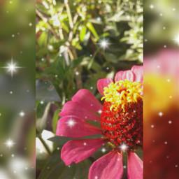 linda_flor🌸 boa_tarde❤ freetoedit linda_flor boa_tarde