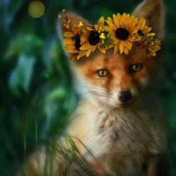 fox freetoedit